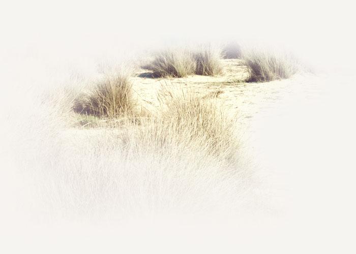 Melifera-accueil-dunes-oleron-legende-partager
