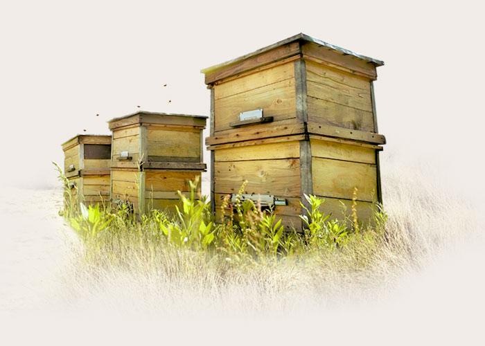 Melifera-engagements-abeille-noire-ruches-Oleron