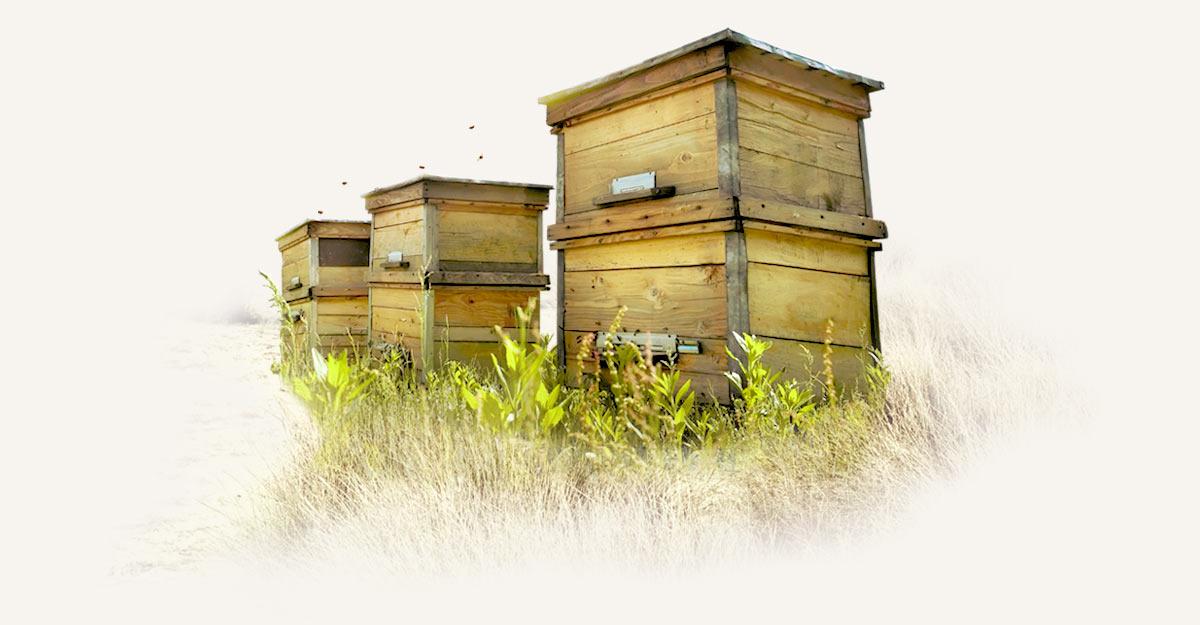 Melifera-gin-francais-engage-pour-protection-abeille-noire-ruches-dune